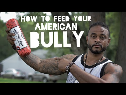 How To Feed Your American Bully Puppy to Gain Weight