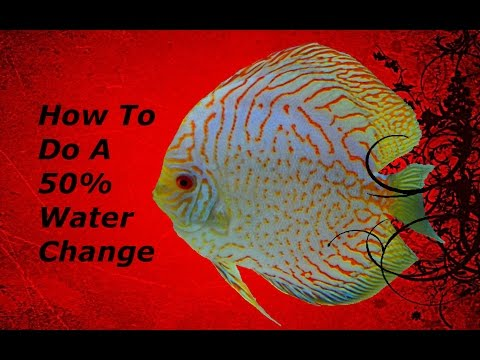 How To Do A 50% Water Change for Freshwater Discus Fish. Step By Step Walkthrough. Tips/Tricks.