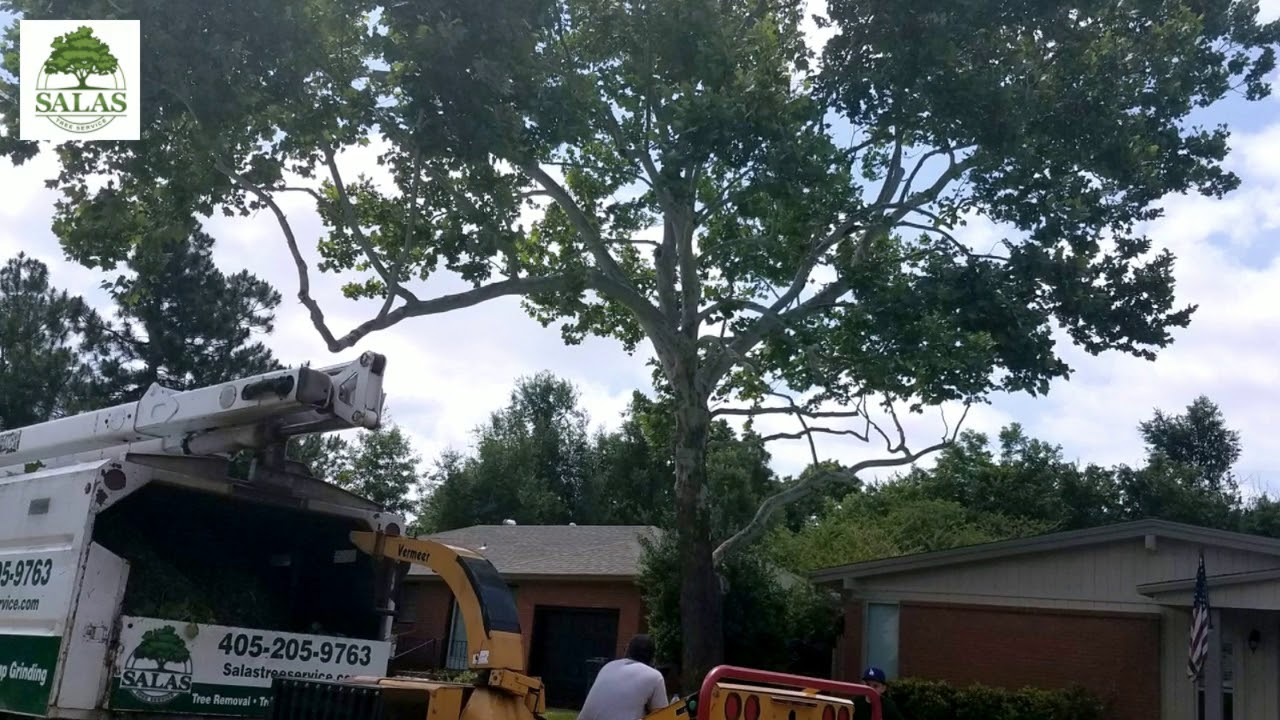 Tree Trimming For CKeller HD
