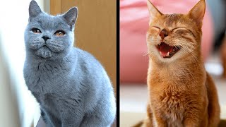 Rarest and Most Exotic Cats