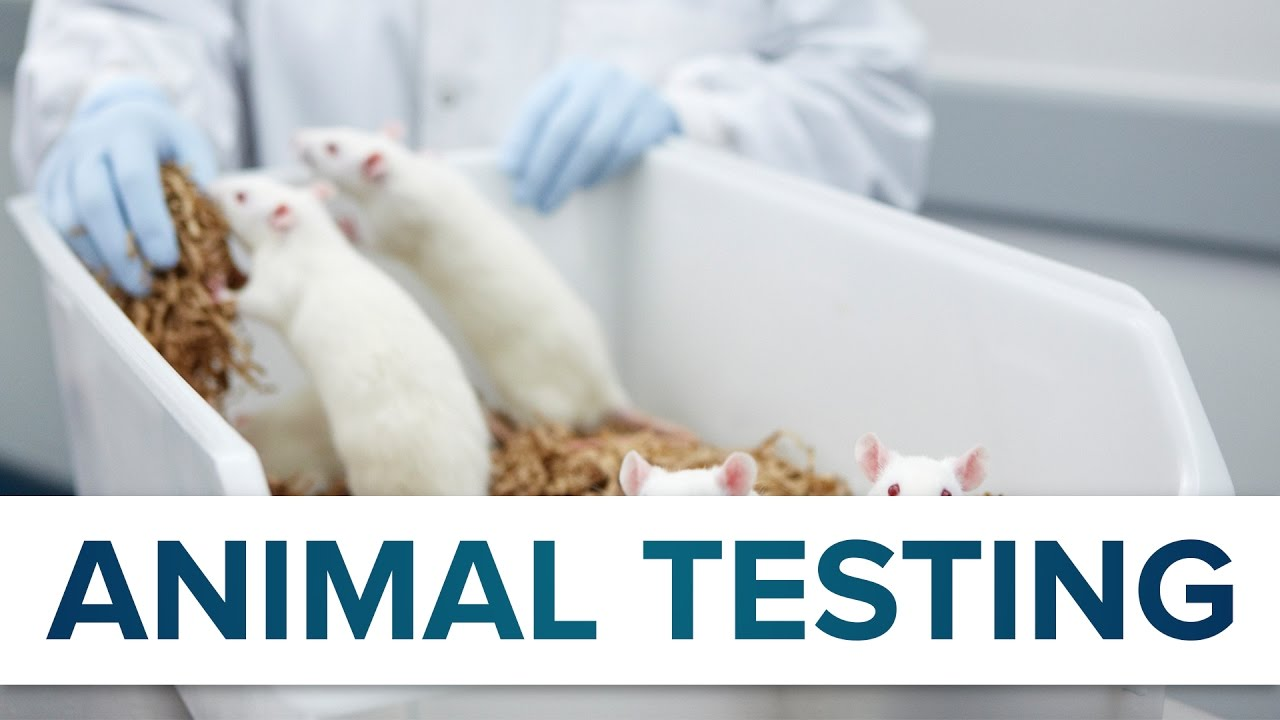 common ground on animal testing Review opinions on the online debate animal testing debates are common illnesses that have been safety and security of animals through animal testing.