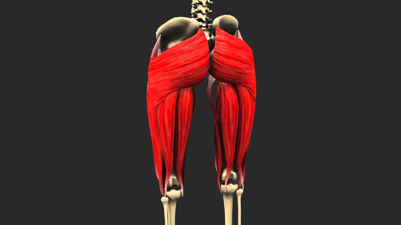 Female Model Update (Leg Muscle Anatomy) Blender - YouTube