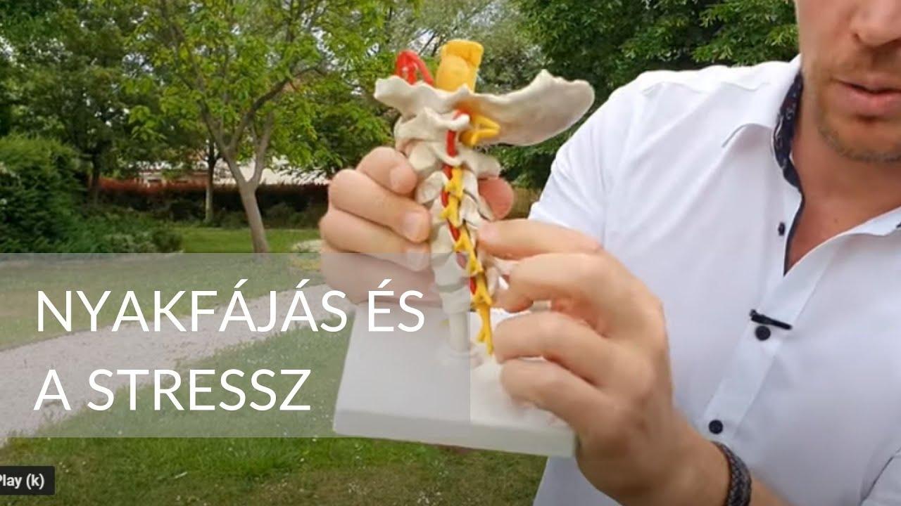 a nyaki platyhelminták testszimmetriája)