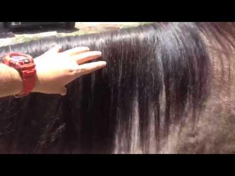 Uso De B Horse Shampoo