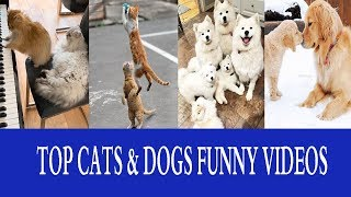 Cats And Dogs Funny Compilation 2019 - Best Cat Andamp Dog Animal Viral Moments Videos 2019.