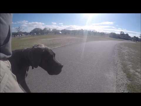 "Great Dane ""Vito"" l Amazing Transformation l Dog Trainers Hampton Roads"