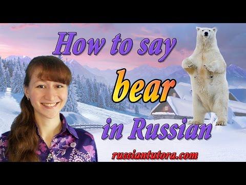 Russian Word For Polar Bear | Polar Bear In Russian Translation Or How To Say Polar Bear In Russian