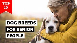 Top 10 Dog Breeds For Senior People