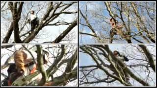 ARBOLAK à Arcangues Elagage Abattage Soins aux arbres