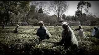 REAL HISTORY OF ASSAM TEA - Assam INDIA  ( KADlien__R&D TV Channel )