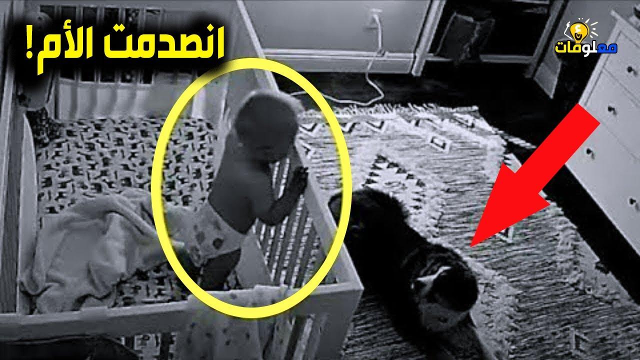 وضعت الأم كاميرا لمراقبة طفلتها في البيت.. لن تصدق ما فعله هذا الكلب