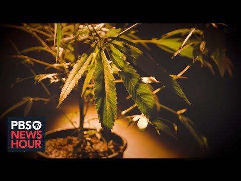 How Colorado's Marijuana Legalization Strengthened The Drug's Black Market | Marijuana