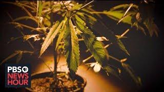 How Colorado's marijuana legalization strengthened the drug's black market