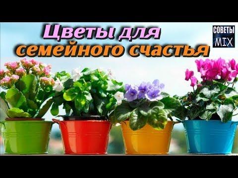 10 растений, которые должны быть у Вас дома. Комнатные цветы для любви и счастья