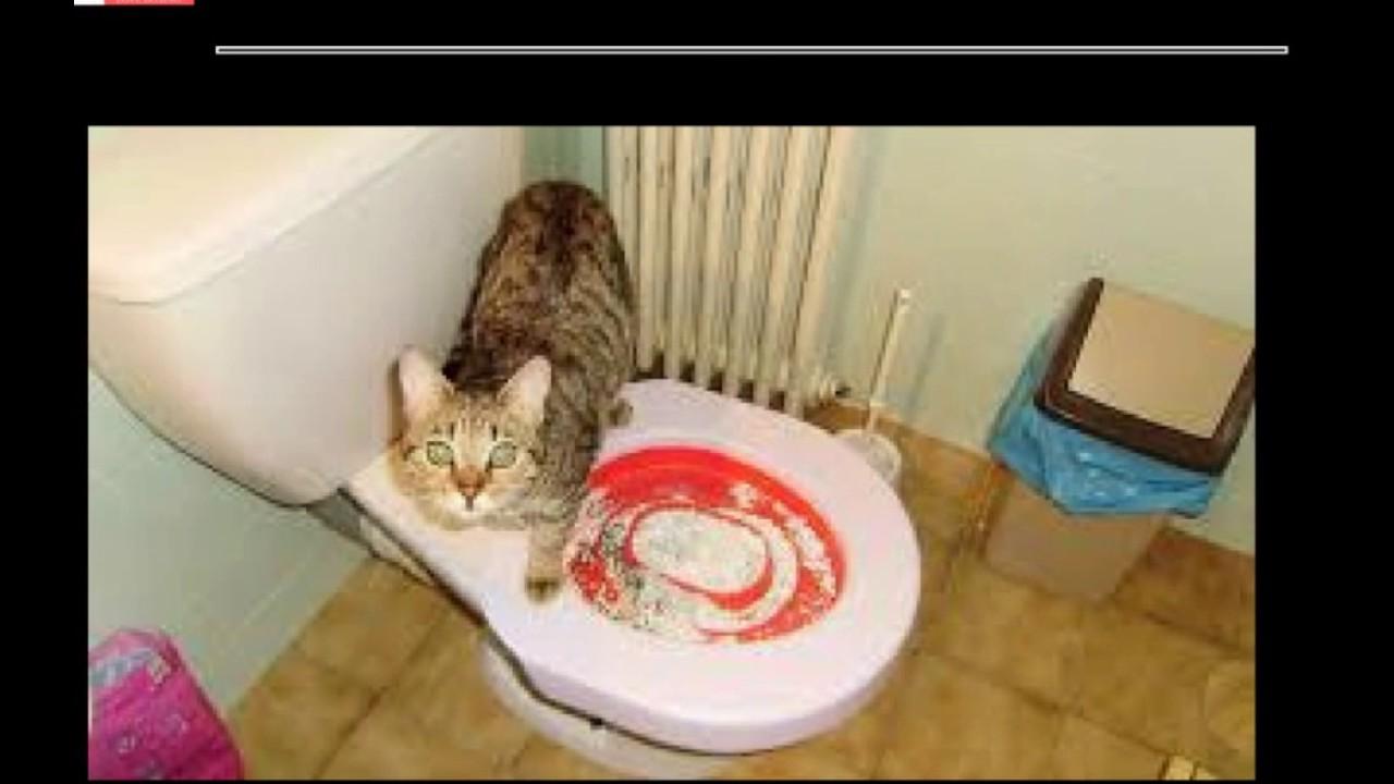 tuto you tube comment habituer son chat a faire ses besoins sur les toilettes youtube. Black Bedroom Furniture Sets. Home Design Ideas