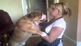 Bulldog Lovers Lucky English Bulldog Kisses Cute Blonde Chick