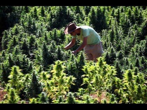 52 Minutes Pour Mieux Comprendre Le Cannabis