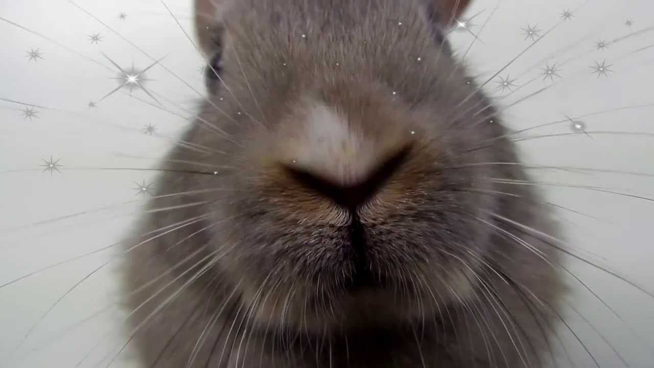Bunny Noses Twitching So Adorable Youtube