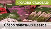 Чернокорень лекарственный Cynoglossum officinale - YouTube