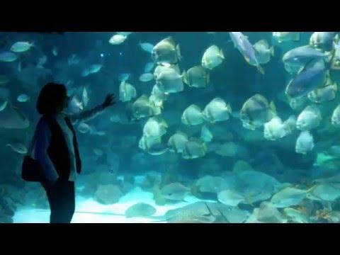 İstanbul Sea Life Akvaryum
