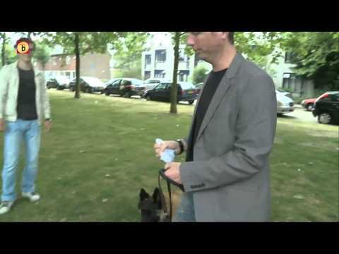 Omroep Brabant over SnoepDog