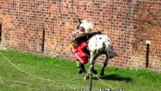 pokazy na koniach