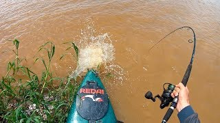 O INCRÍVEL E RARÍSSIMO BAGRE DOURADO!!! Pescaria.