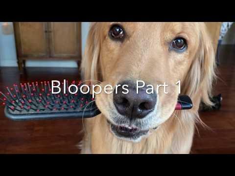 Tik Tok Service Dog Bloopers Part 1