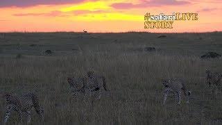 5 Musketeers: The Cheetah Brotherhood