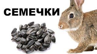 Можно ли кроликам семечки? Кролиководство в домашних условиях