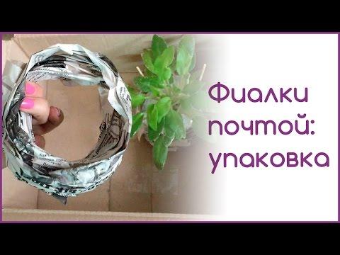 Фиалки и всё о них: Комнатные растения