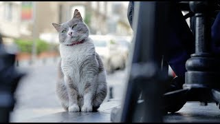 Город Кошек – тизер (в кино с 30 ноября)