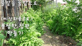 (풀밭을 꽃밭으로)씨앗 파종으로 풍성한 정원 만들기,벨…
