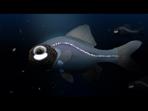 The Flashlight Fish Anomalops katoptron Uses Bioluminescent Light to Det...