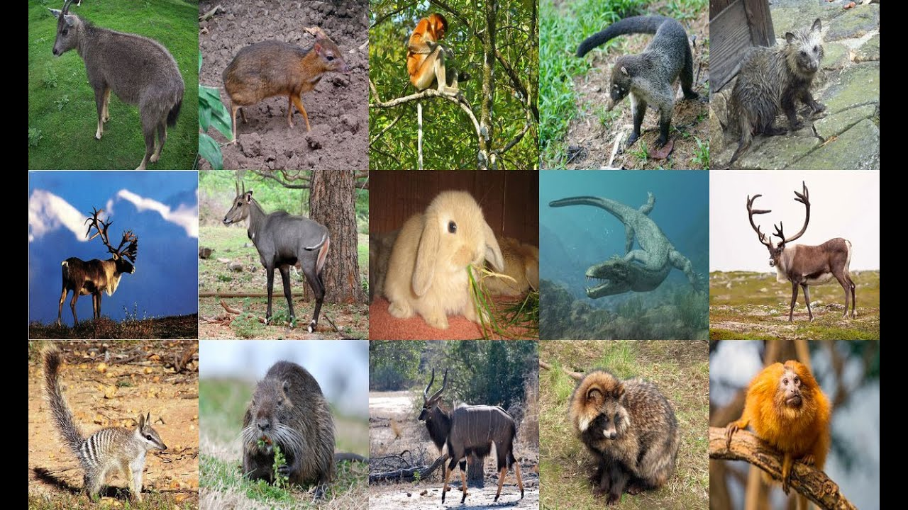 List Of Animals Starting With N All Animals Youtube