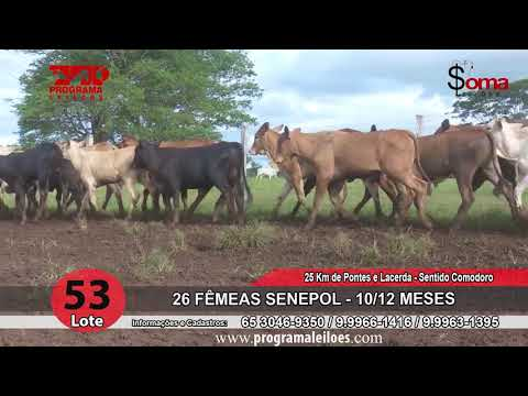 LOTE 53R
