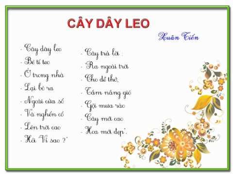 cay day leo