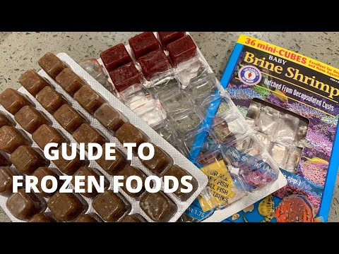 Beginners Guide To Frozen Fish Food