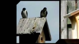 Birds At The Garden Bird House