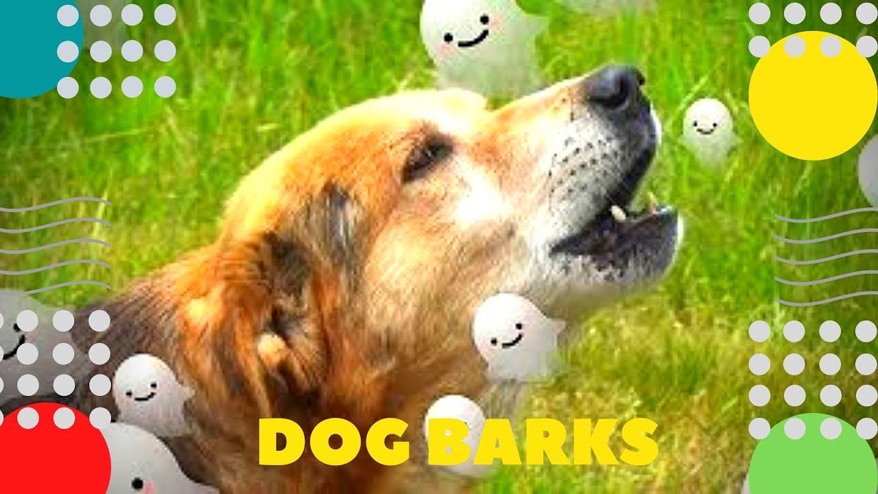 Собака лает Победитель в программе Голос Dog barks Эффект приведение Hund bellt Le chien aboie Perro