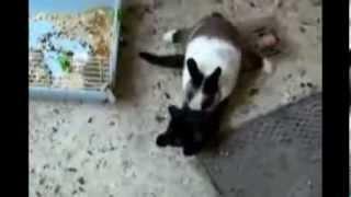 MORRA DE RIR  - Gatos Engraçados