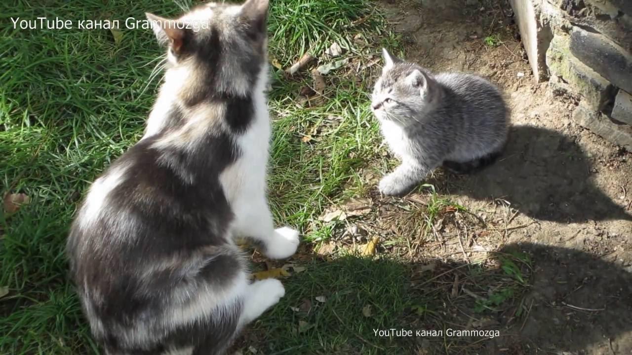 Кошка и котята.Funny Cats and Kittens КОТЯТА.Смешные ...