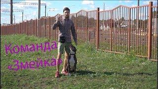 Обучение команде Змейка    Дрессировка собак в Минске
