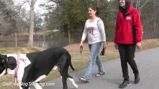 Advanced Dog Training Methods - Dog Training Commands