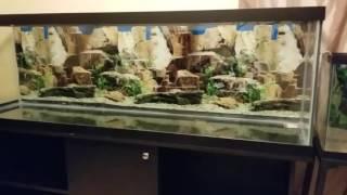 How-to Setup a New or Used Aquarium / Fish Tank