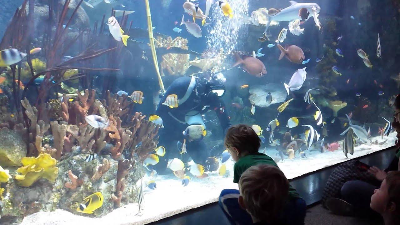 Mn Zoo Aquarium Feeding Time Youtube