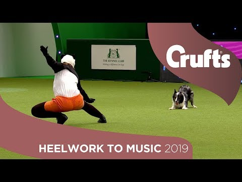 Freestyle International Heelwork to Music - Part 3 | Crufts 2019
