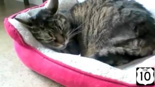 Почему стоит купить лежак для собаки и кота отдельно? Вот почему! :D