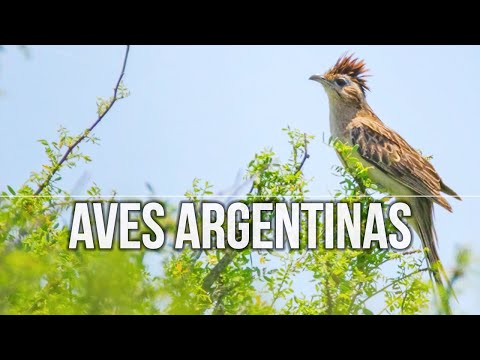 🦉 Ornitologia & BIRDWATCHING 🐦 en Córdoba 🇦🇷 ARGENTINA