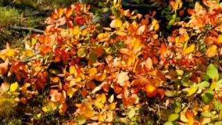 Lemonchill - Open Rene (Kay-D remix)